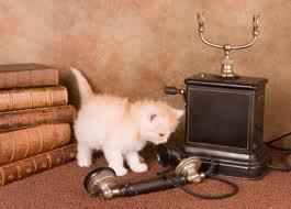 catwithphone