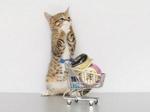 CatShoppingblog