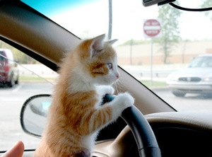 cat-driving-carblog