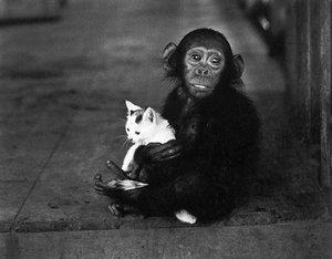 Chimpanzeeandcatfriendsblog