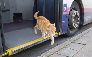 CatWhoTakestheBusRegularly