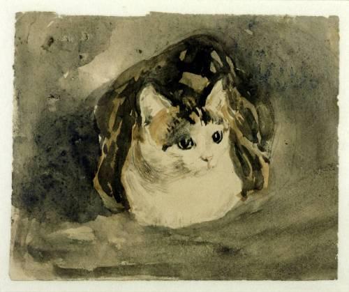 Cat circa 1904-8 Gwen John 1876-1939 Purchased 1940 http://www.tate.org.uk/art/work/N05154