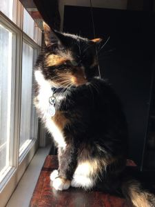 KeiraKittycat