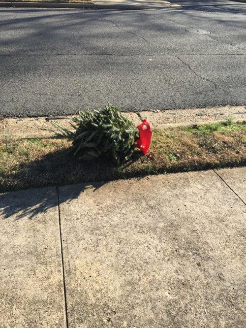 PoortinyTree