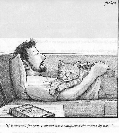 NewYorkerCartoonforCatlovers
