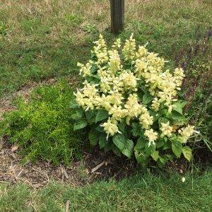 Yellowfloweringbushsummer