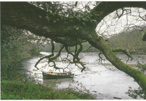 enchantedcornwallboatundrtree